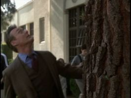 Giles walks into a tree